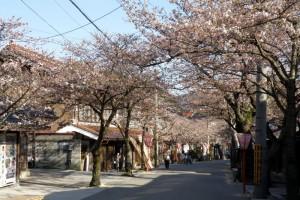 新庄宿ーがいせん桜ー