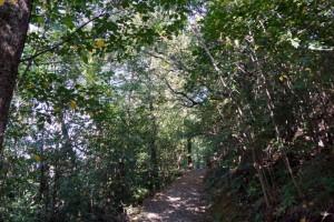 早島ふれあいの森公園ー遊歩道ー