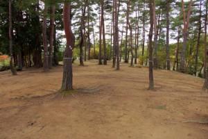 亀島キャンプ場ー松林ー