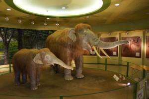 倉敷自然史博物館