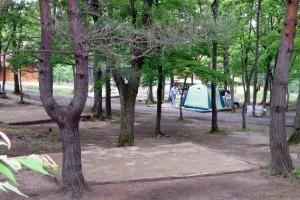 のとろはらキャンプ場ーテントサイトー