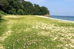 三郎島キャンプ場