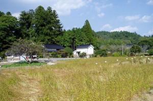 草間自然休養村 ーそば畑ー
