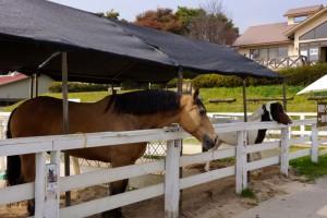 乗馬体験ーひるぜんジャージーランドー