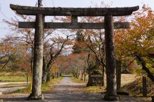 桜並木ー茅部神社ー