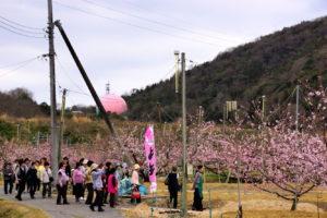赤磐市 鴨先地区の桃畑-2