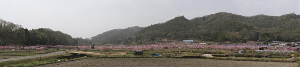 赤磐市 鴨先地区の桃畑パノラマ