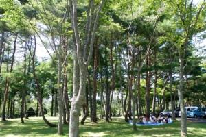 緑陰ー八束自然牧場公園ー