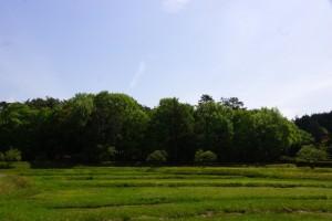 備中国分尼寺跡松林