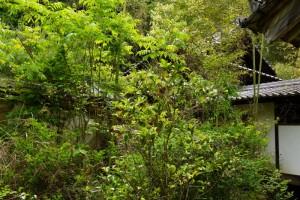 木下家霊廟ー大光寺ー