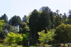 箭田郷土自然保護地域