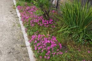 風の道の花