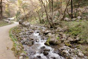 渓流ー神庭の滝ー
