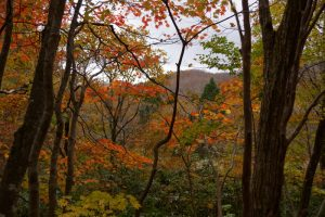 紅葉ー岡山県立森林公園ー