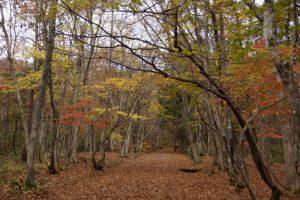中央園路ー岡山県立森林公園ー