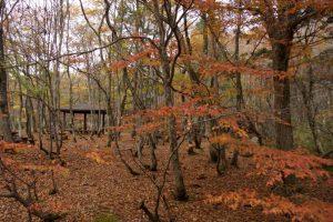 かえで園地ー岡山県立森林公園ー