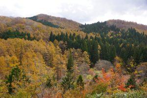 針葉樹林ー岡山県立森林公園ー