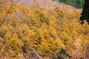 からまつ林ー岡山県立森林公園ー