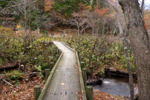 おたからこう湿原ー岡山県立森林公園ー
