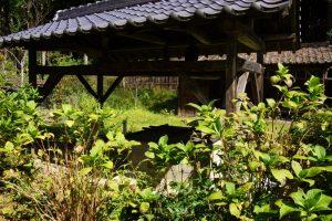 井戸とアジサイー椎の木御殿ー