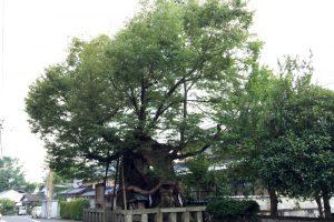 祝木のケヤキー中山神社ー
