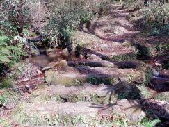 石を敷きつめた道ー若杉天然林ー