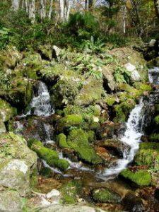 吉野川水源ー若杉天然林ー