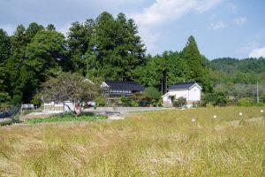 そば畑ー草間自然休養村ー