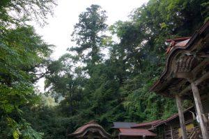神木(大杉)ー穴門山神社ー