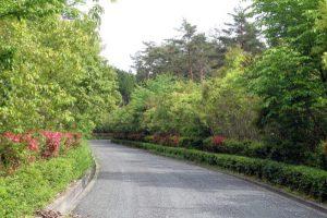 県道441号線ー健康の森ー