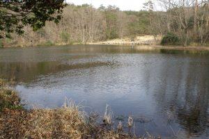 鯉が窪池ー鯉が窪湿原ー