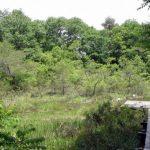 おもつぼ湿原