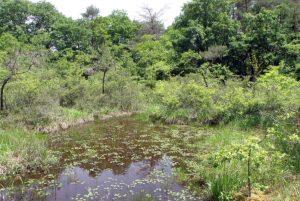 おもつぼ湿原ーすずらんの園ー