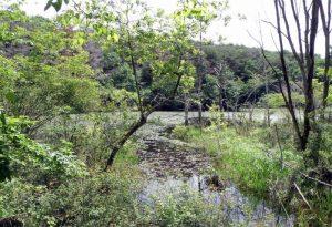 池ーすずらんの園ー