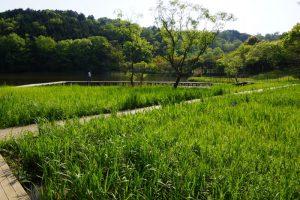 水生植物園ー岡山県自然保護センターー
