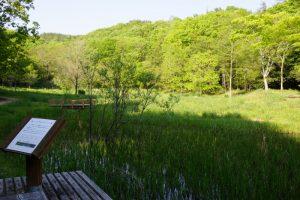 トンボの生息域ー岡山県自然保護センターー