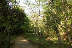 昆虫の森ー岡山県自然保護センターー