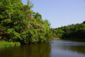 上池と藤の花ー岡山県自然保護センターー