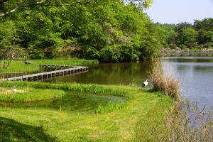 上池ー岡山県自然保護センターー