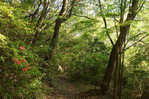 山ツツジー岡山県自然保護センターー