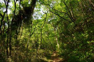 森の小路ー岡山県自然保護センターー