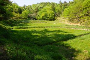 野草園ー岡山県自然保護センターー