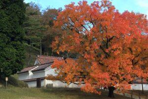 聖廟と櫂の木ー閑谷学校ー
