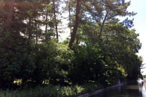 天王社刀剣の森ー横には用水がー