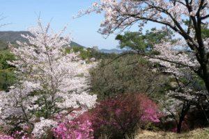 つつじと桜ーみやま公園ー