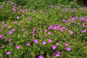 夏花の庭ー深山イギリス庭園ー