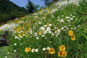 花の園ー深山イギリス庭園ー