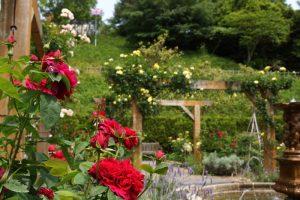 バラの庭ー深山イギリス庭園ー