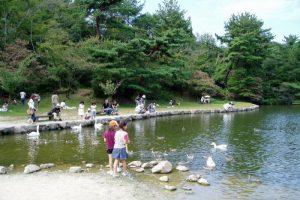 赤松池の白鳥とカモーみやま公園ー