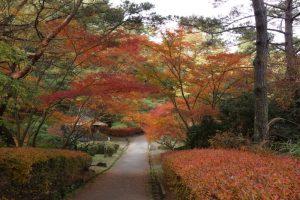 花木園付近ーみやま公園ー